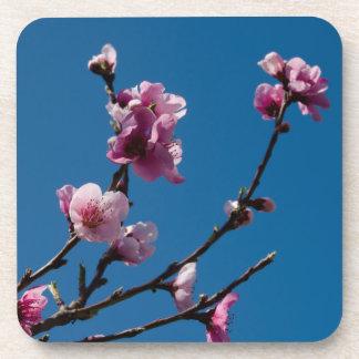 Flor del melocotón y cielo azul posavasos de bebidas