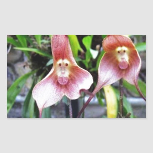 Flor del MONO: Maravillas de los milagros de la Rectangular Pegatina