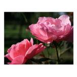 Flor del nacimiento - JUNIO - color de rosa Postal