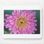 Flor del nacimiento - noviembre - crisantemo tapete de raton