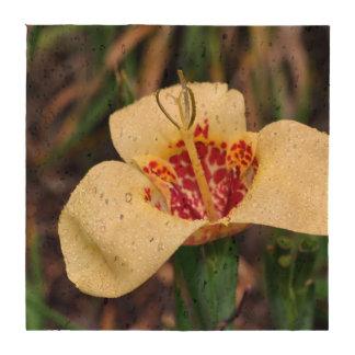 Flor del pavonia de Tigridia o del lirio del casqu Posavasos