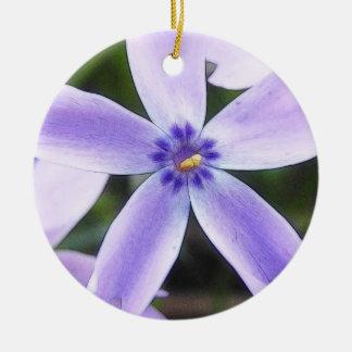 Flor del Phlox del arrastramiento del primer Ornatos