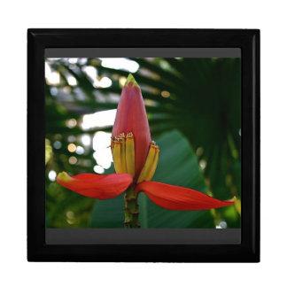 Flor del plátano cajas de recuerdo