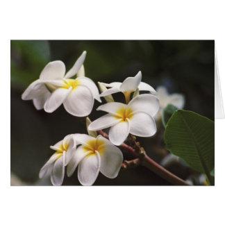 Flor del Plumeria Tarjeton