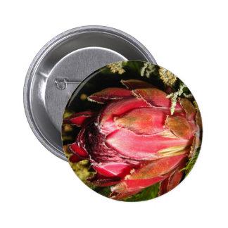 Flor del Protea Pin