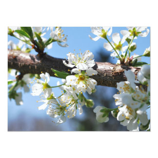Flor del Prunus Anuncio Personalizado