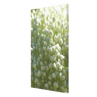 Flor del puerro - verde de la primavera impresion en lona