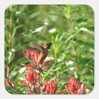 Flor del rojo del pájaro del colibrí pegatina cuadrada