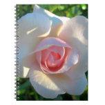Flor del rosa color de rosa