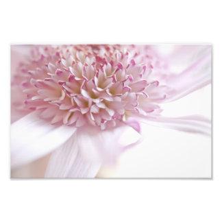 Flor del rosa en colores pastel fotografia