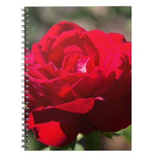 Flor del rosa rojo libretas