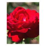 Flor del rosa rojo membrete personalizado