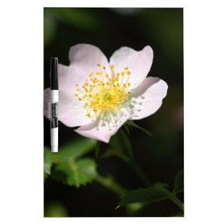 Flor del suave-rosa duro pizarras
