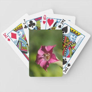 Flor del tabaco (tabacum de la nicociana) baraja de cartas bicycle