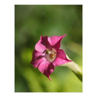 Flor del tabaco (tabacum de la nicociana) membrete