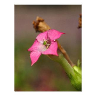 Flor del tabaco (tabacum de la nicociana) membretes personalizados