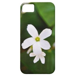 Flor del trébol iPhone 5 carcasas