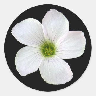 Flor del trébol pegatina
