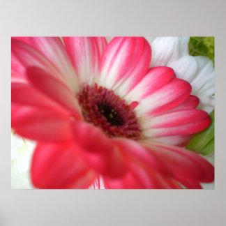 Flor del verano posters