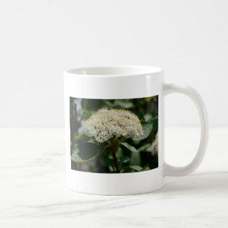 Flor del verano taza clásica