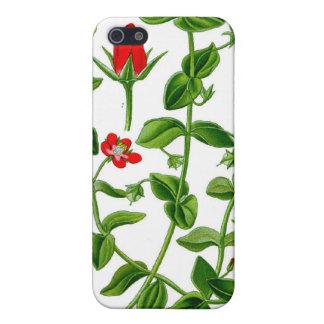 Flor delicada hermosa de la primavera roja iPhone 5 carcasa
