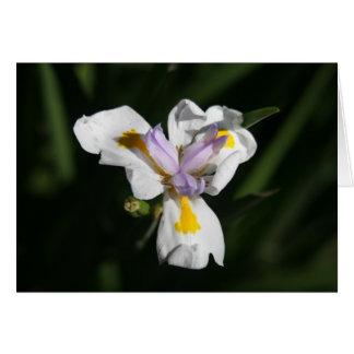 flor delicada felicitación