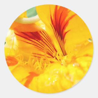 Flor en amarillo etiqueta redonda