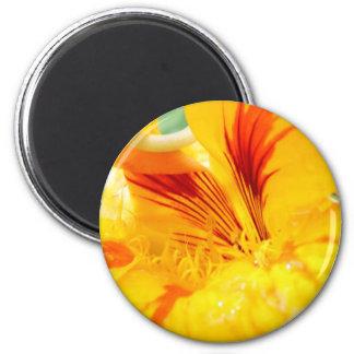 Flor en amarillo iman