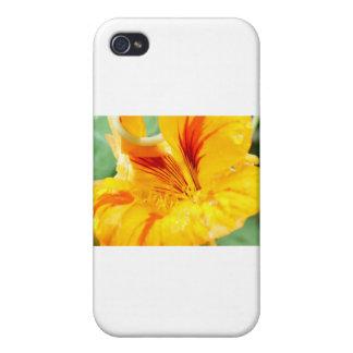 Flor en amarillo iPhone 4 protectores