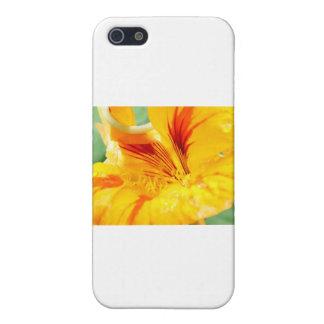 Flor en amarillo iPhone 5 cárcasa