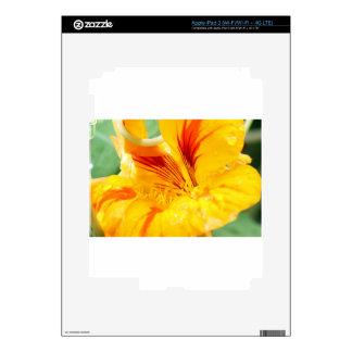 Flor en amarillo pegatina skin para iPad 3