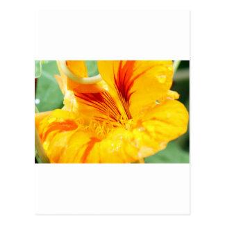 Flor en amarillo postal