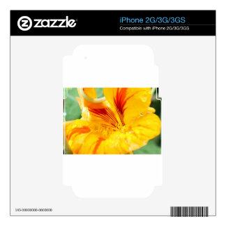 Flor en amarillo skins para iPhone 3G