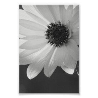 Flor en B/W Arte Fotográfico