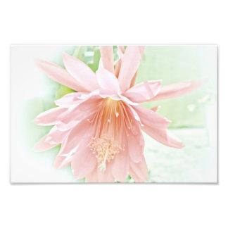 Flor en colores pastel bonita impresiones fotograficas