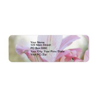 Flor en colores pastel rosada bonita etiquetas de remite