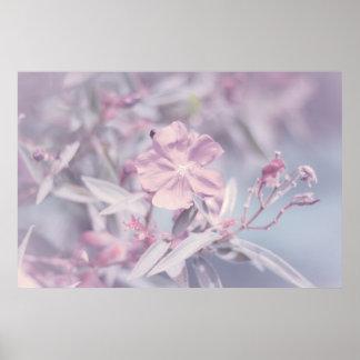 Flor en colores pastel suave de la lavanda poster