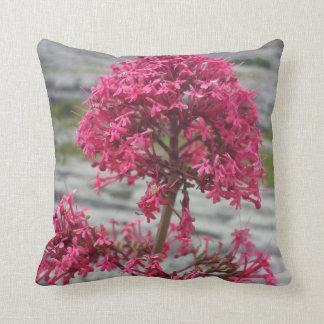 Flor en el Burren, almohada de tiro del Co. Clare