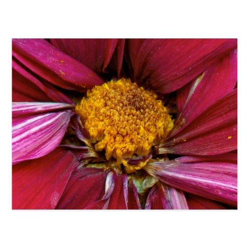 Flor - en el centro de él todo tarjeta postal