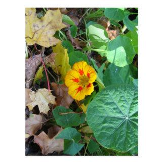 Flor en hojas postales
