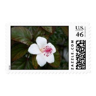 Flor en Kauai Envio