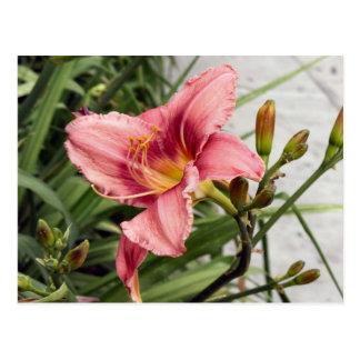 Flor en la acera tarjeta postal