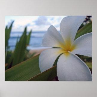 Flor en la playa posters