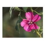 Flor en la postal de la mañana