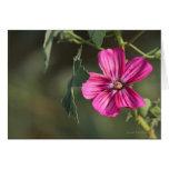 Flor en la tarjeta de felicitación de la mañana