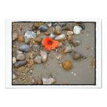 Flor en la tarjeta de la playa comunicados