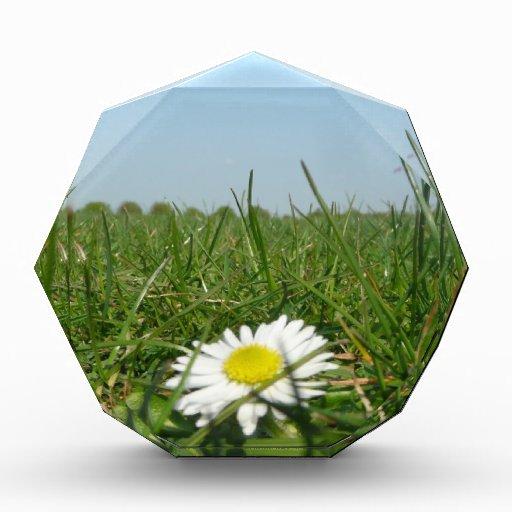 Flor en la tierra