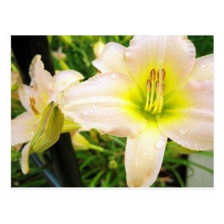Flor en la universidad de Purdue Tarjetas Postales