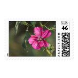 Flor en los sellos de la mañana