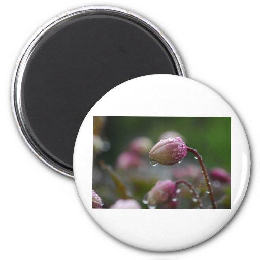Flor en rocío imán de frigorífico